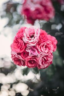 Flores rosa rosa