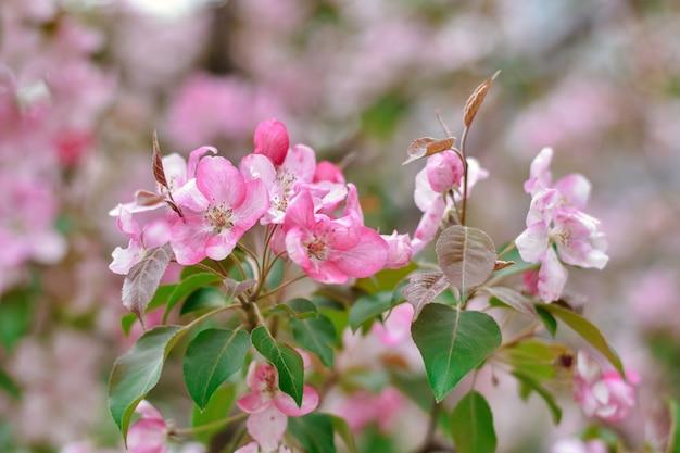 Flores rosa sakura close-up cerejeira flores rosa em um galho