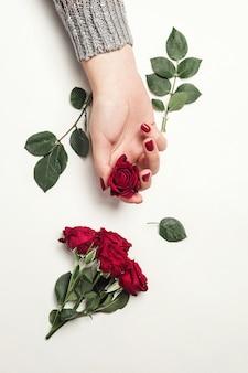 Flores rosas nas mãos da garota, vista de cima, pequenas rosas vermelhas no fundo branco