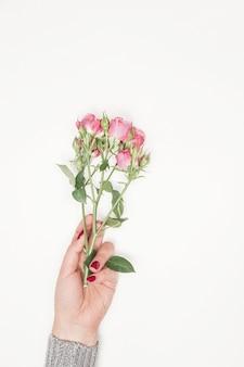 Flores rosas nas mãos da menina, vista superior, vista superior, pequenas rosas cor de rosa no fundo branco