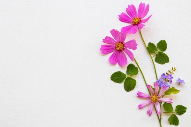 Flores roxas arranjo cosmos plano leigos estilo cartão-postal