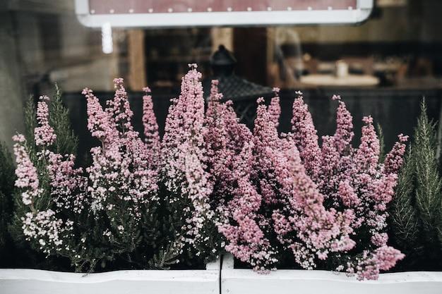 Flores roxas coloridas em vaso de flores ao ar livre