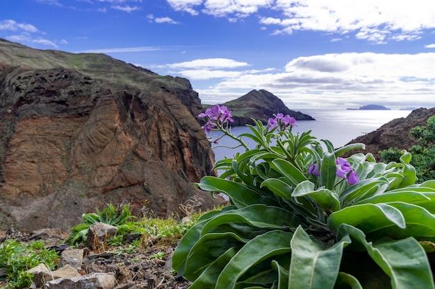 Flores roxas com uma bela vista da ilha da madeira em portugal