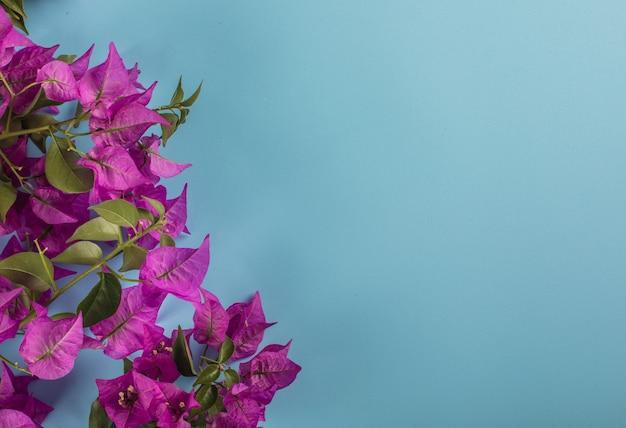 Flores roxas no canto esquerdo com espaço de cópia em uma superfície azul
