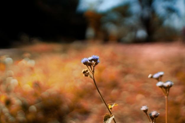 Flores roxas no verão