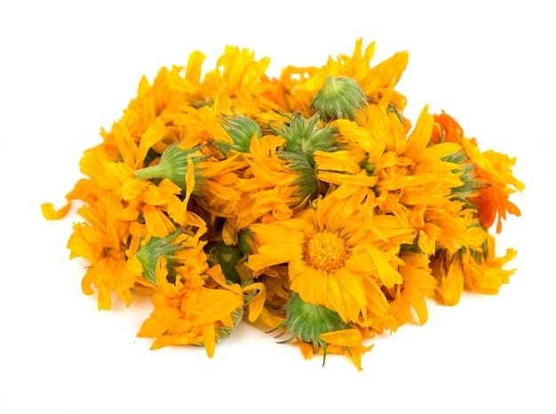 Flores secas de calêndula isoladas ervas medicinais.
