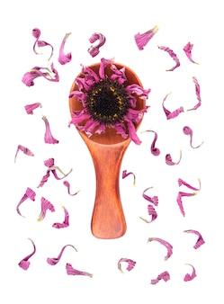 Flores secas de equinácea na colher de pau isoladas