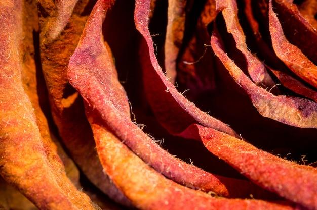 Flores secas. detalhe disparou de um close up cor-de-rosa vermelho.