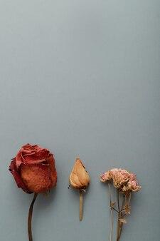 Flores secas e superfície plana