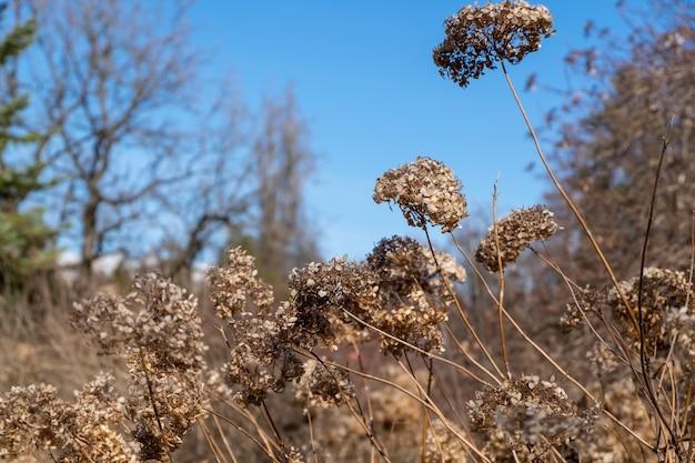 Flores secas em um parque da cidade no início da primavera