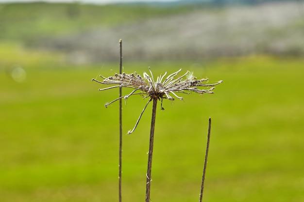 Flores secas na parede do campo verde em alta resolução.