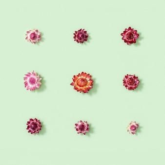 Flores secas naturais pequena flor vermelha em verde suave design floral