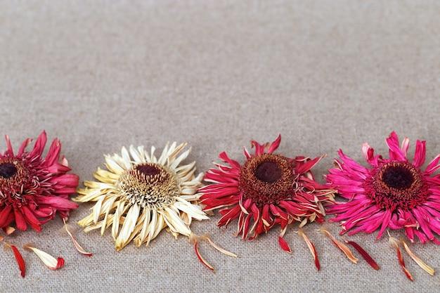 Flores secas vermelhas brilhantes no primeiro plano de um cartão com espaço de cópia. fundo desfocado