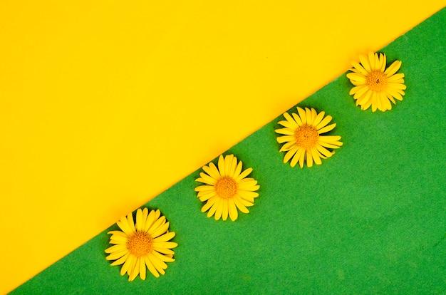 Flores selvagens de campo amarelo sobre fundo de cor brilhante