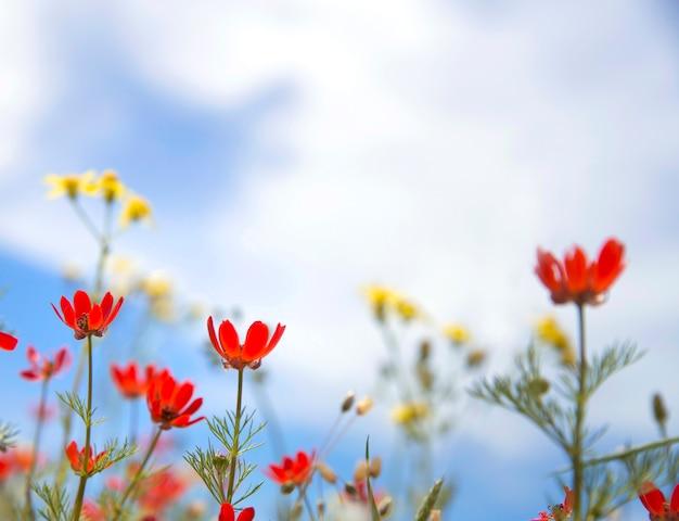 Flores selvagens vermelhas