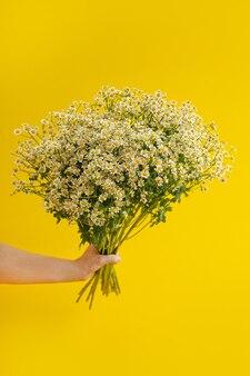 Flores semelhantes a margaridas na mão sobre fundo amarelo. copyspace com conceito de flor. cores da moda 2021. close up de pequenas flores de camomila na vertical
