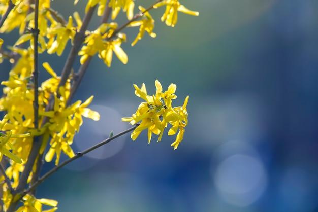 Flores silvestres amarelas em fundo desfocado