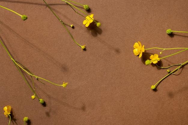 Flores silvestres amarelas em fundo marrom com copyspace moderna composição na moda com flores secas d ...