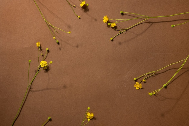 Flores silvestres amarelas sobre fundo marrom com copyspace. composição moderna e moderna com flores secas, sombras escuras vista superior