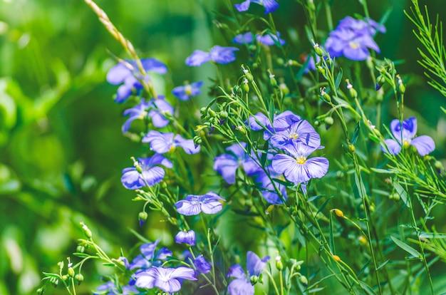 Flores silvestres azuis em um dia de verão