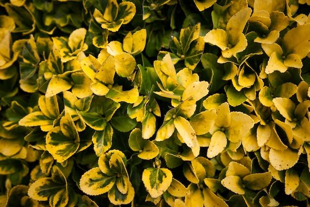 Flores silvestres de close-up