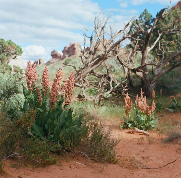 Flores silvestres e plantas secas crescendo em uma área deserta