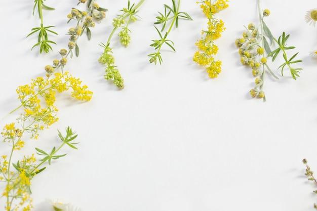 Flores silvestres em fundo de papel branco