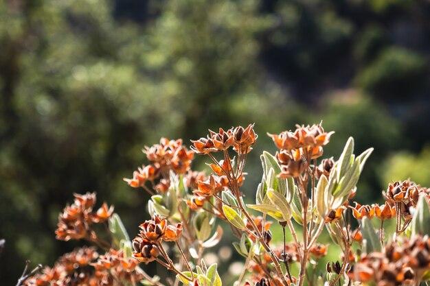 Flores silvestres laranjas fecham-se nas montanhas em um dia ensolarado