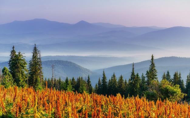 Flores silvestres nas montanhas ao pôr do sol.