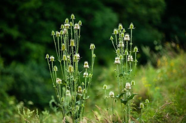 Flores silvestres no campo de verão