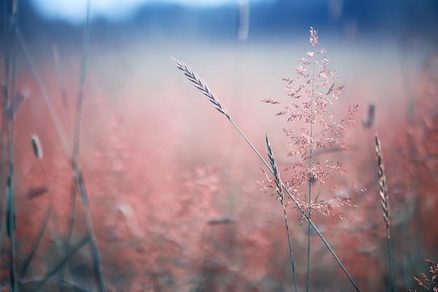 Flores silvestres. pequenas flores na primavera de um prado verde.