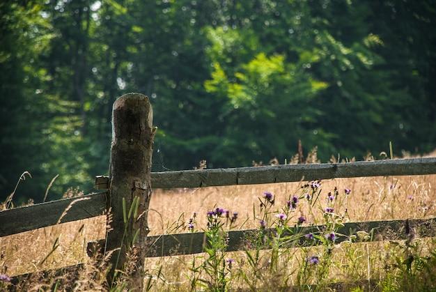 Flores silvestres perto de uma cerca de madeira velha. no fundo é visto um prado e uma floresta