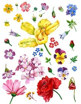 Flores silvestres, pintado em aquarela em branco