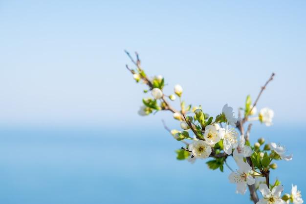 Flores sobre fundo borrado da natureza. flores da primavera. fundo da primavera com bokeh azul claro copyspace