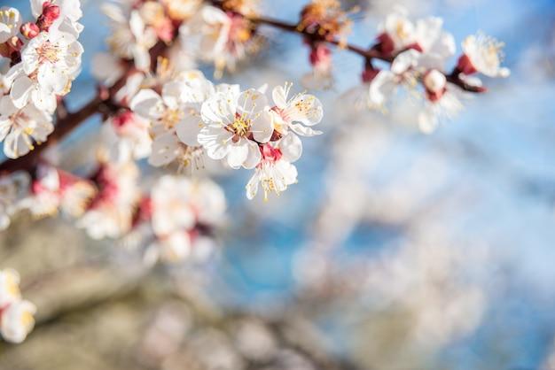 Flores sobre fundo borrado da natureza. flores da primavera. fundo da primavera com bokeh azul claro