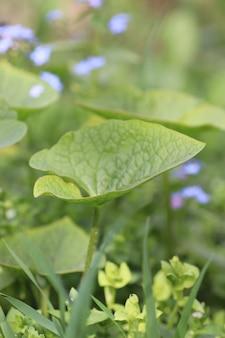 Flores suaves como um lindo fundo verde