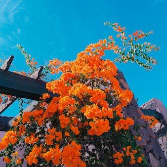 Flores tropicais alaranjadas e céu azul. arte mínima para viagens