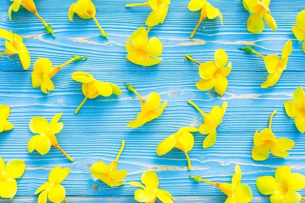 Flores tropicais amarelas, trompete dourado ou allamanda no fundo azul da placa de madeira