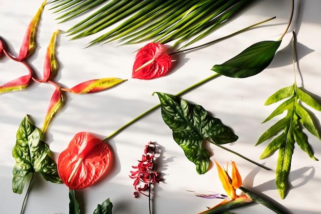 Flores tropicais em fundo branco