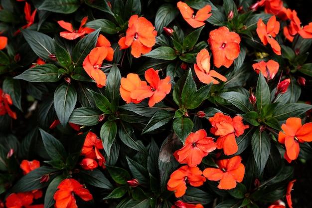Flores tropicais vermelhas e folhas de fundo