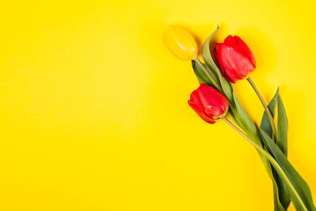 Flores tulipa decorativa