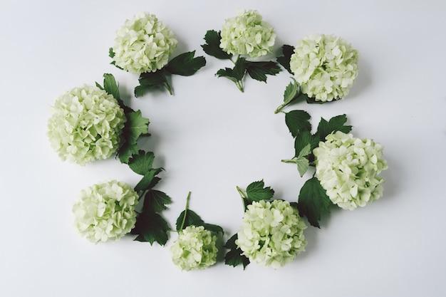 Flores verdes em forma de um círculo mentem sobre um fundo branco