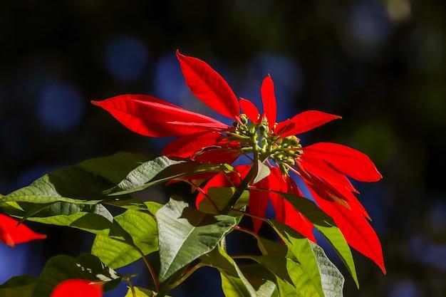Flores vermelhas e folhas no campo e no jardim.