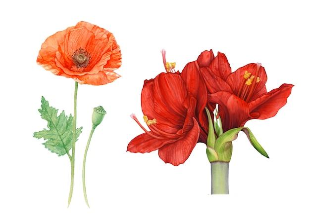 Flores vermelhas em aquarela isoladas.