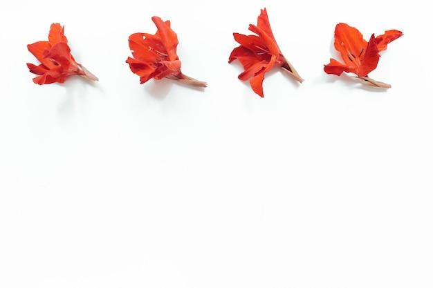 Flores vermelhas em fundo branco. composição de flores. camada plana, vista superior, espaço de cópia. verão, conceito de outono.