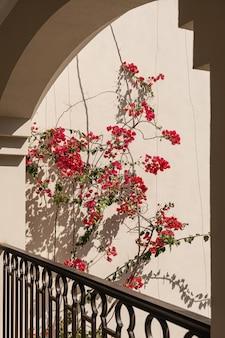 Flores vermelhas em parede bege com sombras de luz solar