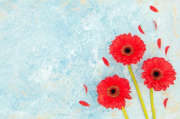 Flores vermelhas frescas da primavera e pétalas sobre o plano de fundo texturizado azul