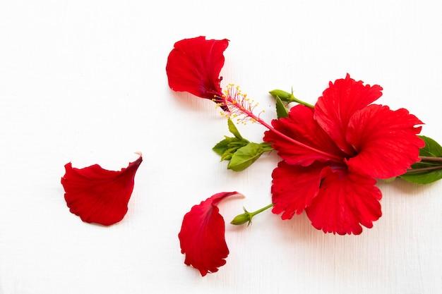 Flores vermelhas hibisco arranjo plano plano estilo cartão postal