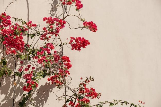 Flores vermelhas plantam ramos e sombra de luz solar em parede bege neutra