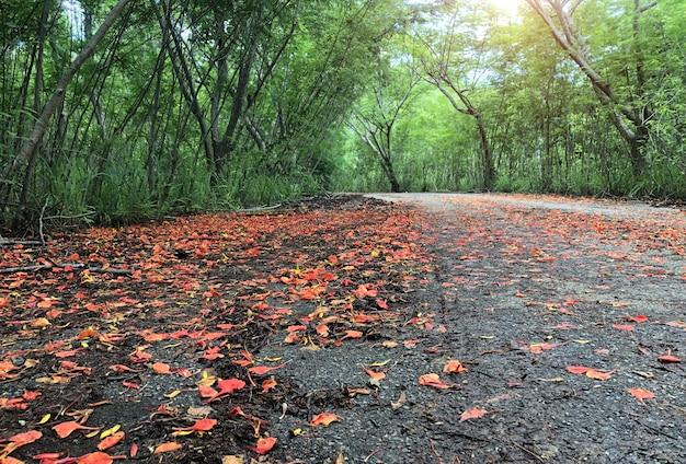 Flores vermelhas que caem nas ruas e florestas verdes
